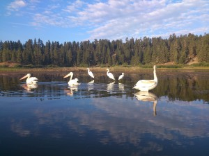 Nature Tours on Big Bear Lake